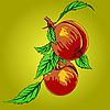 Zwei Pfirsiche mit Blättern auf einem Ast