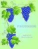 Векторный клипарт: виноградная лоза с пространством для текста
