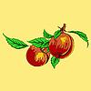 Vektor Cliparts: Zwei Pfirsiche mit Blättern auf einem Ast