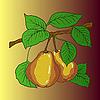 Векторный клипарт: Два зрелые желтые груши