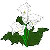 Vector clipart: White Callas