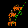 Vector clipart: lily flower on black