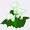 Vector clipart: Background with White Callas