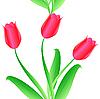 Векторный клипарт: тюльпаны