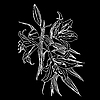 Vector clipart: Black and white background with white flowers