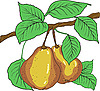 Vector clipart: Two yellow pears with leaves on branch