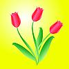 Vektor Cliparts: Bouquet von drei schönen Tulpen
