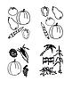 Vektor Cliparts: Set - Gekritzel - Gemüse