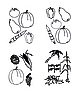 Vector clipart: set - doodles - vegetables