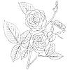 Vektor Cliparts: Strauß von Rosen