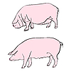 Vector clipart: pigs