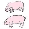 Векторный клипарт: свиньи