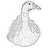Vector clipart: Wild goose.