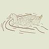 Vector clipart: Wild duck.