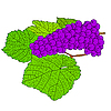 Vector clipart: Grape with leaves