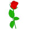 Векторный клипарт: красная роза