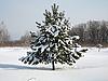 ID 3102494 | 性质。杉木树雪 | 高分辨率照片 | CLIPARTO