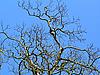ID 3102522   树和蓝色的天空   高分辨率照片   CLIPARTO