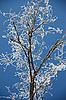 ID 3102546 | 나뭇 가지에 늦었다 덮여 | 높은 해상도 사진 | CLIPARTO