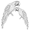 Vector clipart: Macaws..
