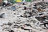 Photo 300 DPI: City dump: the demonstration of environmental problems