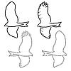 Векторный клипарт: Орел символы и татуировки,.