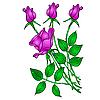 Векторный клипарт: татуировка розы
