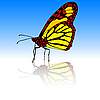 Векторный клипарт: Красивые тропические бабочки..