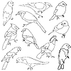 Vector clipart: set of different species of birds