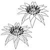Vektor Cliparts: Oriental Lotus - Blume