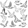 Vector clipart: Set of white doves