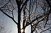 ID 3174938 | 나뭇 가지에 늦었다 덮여 | 높은 해상도 사진 | CLIPARTO