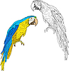 Vector clipart: Macaws.