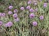 Beautiful blue flowers field | Stock Foto