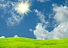 绿色的林间空地上的阳光灿烂的日子 | 免版税照片