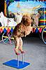 ID 3078975 | 红狮子狗站在 | 高分辨率照片 | CLIPARTO