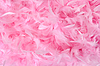 Fluffy bird feathers in pastel colors | Stock Foto