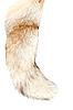 Photo 300 DPI: Tail of the fox