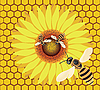 Bee on flower.  | Stock Illustration