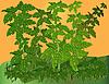 Vector clipart: green plants