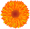 Vector clipart: Yellow-orange flower