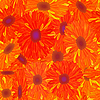 Seamless pattern of yellow-orange flowers