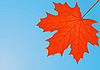 Vector clipart: Autumn red maple leaf