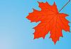 Векторный клипарт: Осенний красный кленовый лист