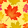 Vector clipart: Seamless pattern of autumn maple leaves