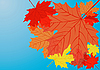 Vector clipart: Autumn maple leaves