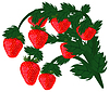 Vector clipart: Ripe red strawberries