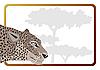 Vector clipart: Leopard