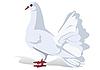 Vector clipart: white dove