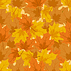 Vector clipart: Autumn maple leaves
